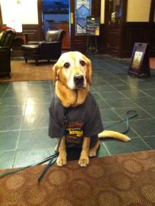 Angel in her very own volunteer shirt!